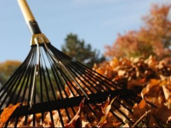 Rake sitting in leaves